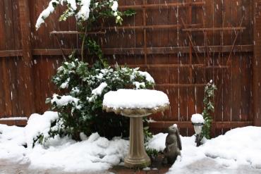 #1 JPEG Snow scene outside window